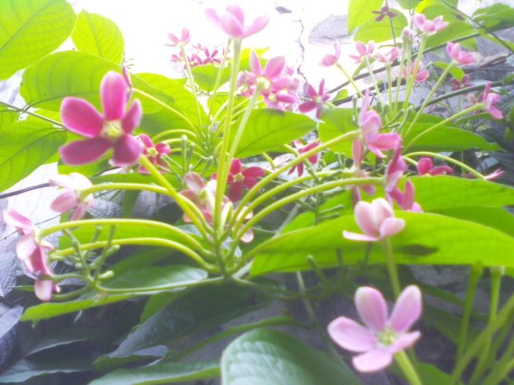 Hoa vô tình lặng lẽ, đất trời chốn mơ hồ, nắng không nề nặng nhẹ, cõi lòng hóa ngây ngô.