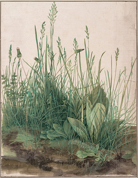 Albrecht Dürer - The Large Piece of Turf, 1503