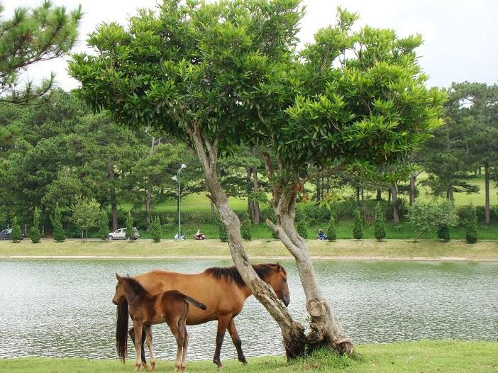 Hồ nước, ngựa, người và xe
