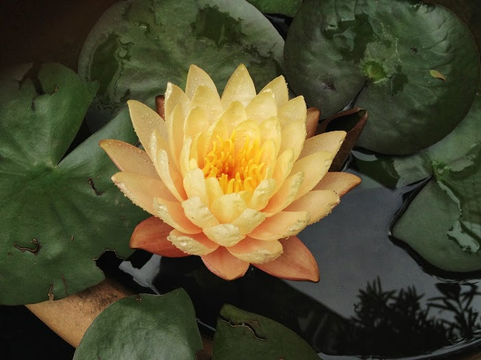 Cầu cho an lạc, yên bình- Thế gian êm ấm, tâm tình hiến dâng.