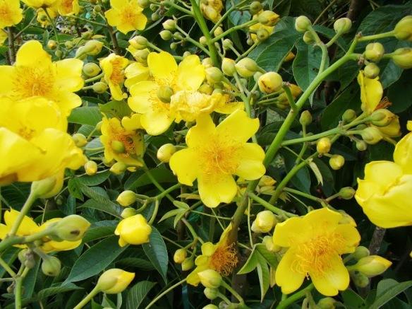 Rạng rỡ nàng hoa phận nữ nhi, mùa vàng hận nắng đùa xuân thì...