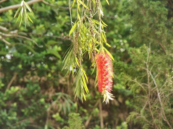 Vận đỏ bướm vàng ai có thấy, tháng ngày bồi lở nước xuôi dòng