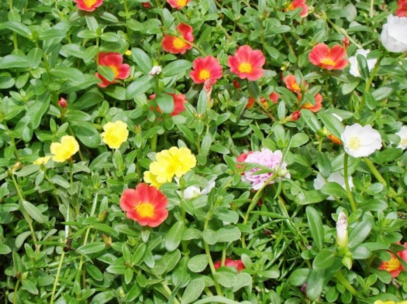 Muôn màu vườn hương hoa, luôn thấy mình khác biệt, yêu thương đời da diết, lời nâng niu hiền hòa