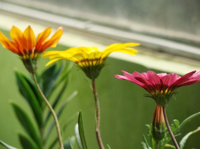 Tưới hoa, đừng tưới cỏ dại; trồng cây, song đừng quên hái ?--
