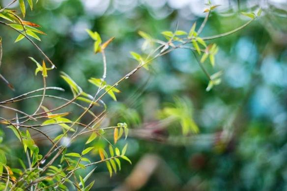 Một đời thơ thới, bởi gió thổi tơi bởi nên rối...